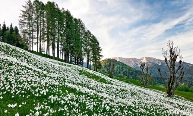 Golica se je uvrstila na seznam top cvetočih destinacij te pomladi