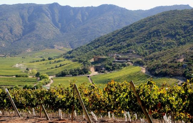 Tour izbral vino iz Čila - francoski vinarji ogorčeni, grozijo z bojkotom
