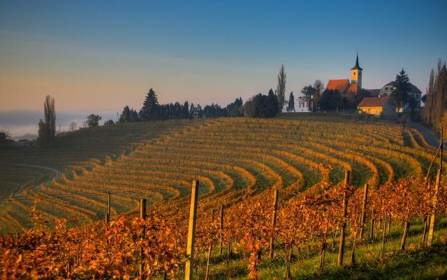 Britanski Independent predlaga vinske počitnice v Sloveniji