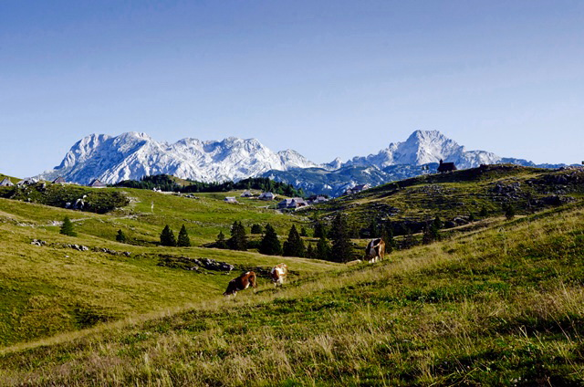 Velika planina – Gradišče (1666 m) čez Gojško planino